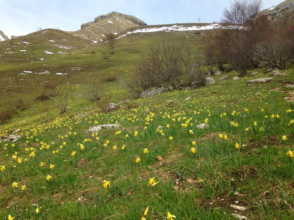 Osterglocken im Jura